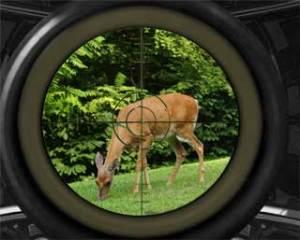 Stück Wild jagen