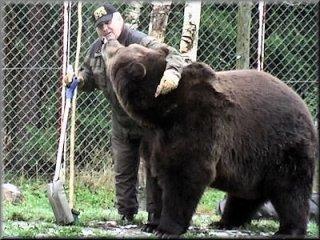 Juan Carlos erschießt zahmen Bären
