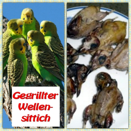 Gegriller Wellensittich