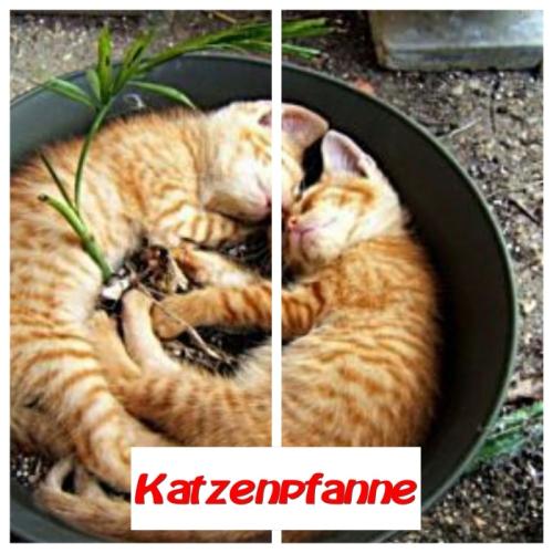 Katzenpfanne