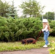 Wildernde Hunde gegen Wölfe